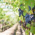 Experiencia de Comida Gourmet y Degustacion de Vino
