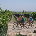 Ronda Wine & Vineyard tours